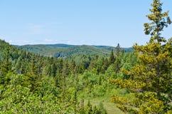 horizontal de forêt de jour ensoleillé terre-neuve Photographie stock libre de droits