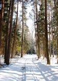 Horizontal de forêt de l'hiver Photographie stock