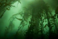 Horizontal de forêt de varech Photographie stock libre de droits