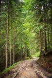 Horizontal de forêt en été image stock