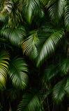 Horizontal de forêt tropicale images libres de droits