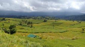 Horizontal de gisement de riz photographie stock