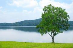Horizontal de Gorgeus avec l'arbre isolé photos stock