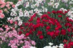 Horizontal de jardin Images stock