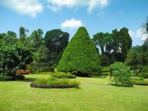 Horizontal de jardin botanique de Peradeniya images stock