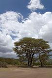Horizontal de l'Afrique Photos stock