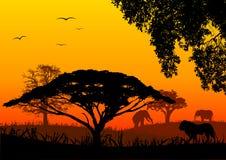 Horizontal de l'Afrique Photographie stock libre de droits