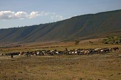 Horizontal de l'Afrique, ngorongoro Photo libre de droits