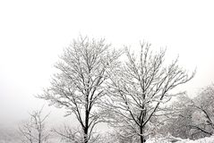 Paysage d'hiver Image stock