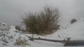 Horizontal de l'hiver clips vidéos