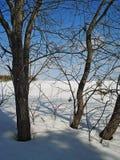 Horizontal de l'hiver Arbres au bord d'un champ février urals Image stock