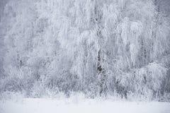 Horizontal de l'hiver Arbres bloqués par la neige congelés Photographie stock libre de droits