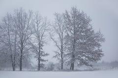 Horizontal de l'hiver Arbres figés blizzard photos libres de droits
