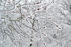 Horizontal de l'hiver avec des arbres Photographie stock