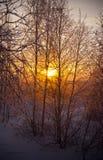 Horizontal de l'hiver avec des arbres photos libres de droits