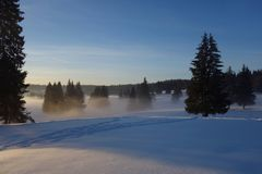 Horizontal de l'hiver avec des sapins Image stock