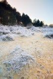 Horizontal de l'hiver avec l'herbe figée Photo libre de droits