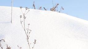 Horizontal de l'hiver avec les arbres neigeux banque de vidéos