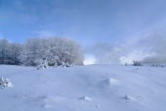Horizontal de l'hiver avec les arbres neigeux Photo libre de droits