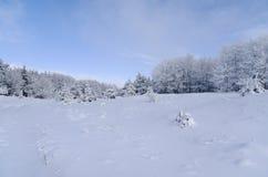 Horizontal de l'hiver avec les arbres neigeux Images libres de droits