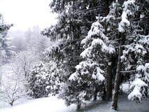 Horizontal de l'hiver avec les arbres neigeux Image libre de droits