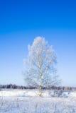 Horizontal de l'hiver d'arbre givré Photos stock