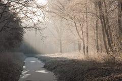 Horizontal de l'hiver dans une forêt figée Photo stock