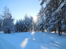 Horizontal de l'hiver en Carélie Images libres de droits