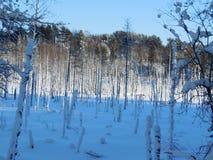 Horizontal de l'hiver en Carélie Photographie stock