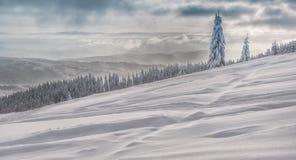 Horizontal de l'hiver en montagnes beskidy polonaises image libre de droits