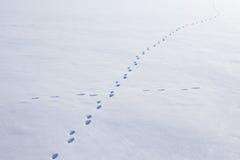 Horizontal de l'hiver en Pologne Image libre de droits