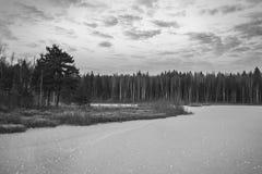 Horizontal de l'hiver Fond de l'hiver pour la conception La beauté de l'hiver Ton froid Promenade par la forêt et le lac congelés photographie stock