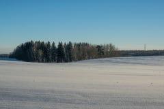 Horizontal de l'hiver Jour ensoleillé Baisse d'hiver Les couleurs lumineuses Paysage simple Chemin forestier de forêt d'hiver fil Images libres de droits