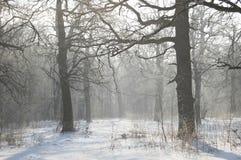 Horizontal de l'hiver Plantation de chêne Arbres forestiers et branches gelés en atmosphère de blanc de gel image stock