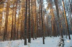 Horizontal de l'hiver Scène de l'hiver Images stock