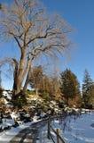 Horizontal de l'hiver, stationnement Photographie stock libre de droits
