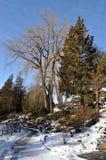 Horizontal de l'hiver, stationnement Photo stock