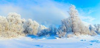 Horizontal de l'hiver Un bon nombre de neige et de gel, matin froid photo libre de droits