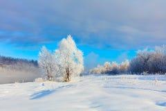Horizontal de l'hiver Un bon nombre de neige et de gel, matin froid photographie stock libre de droits