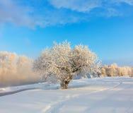 Horizontal de l'hiver Un bon nombre de neige et de gel, matin froid photos libres de droits