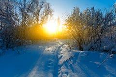 Horizontal de l'hiver Un bon nombre de neige et de gel, matin froid image stock