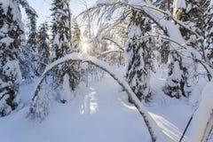 Horizontal de l'hiver un jour ensoleillé Photo stock