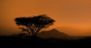 Horizontal de la savane image libre de droits