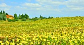 Horizontal de la Toscane : Pienza, Italie image libre de droits