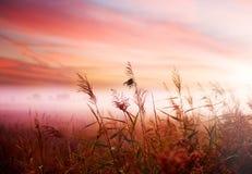 Horizontal de matin Photos libres de droits