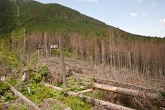 Horizontal de montagne avec les arbres abattus Images stock