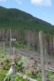 Horizontal de montagne avec les arbres abattus Images libres de droits