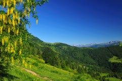 Horizontal de montagne avec les fleurs jaunes Images stock