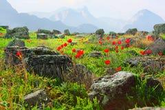 Horizontal de montagne avec les fleurs rouges de pavot Photographie stock libre de droits