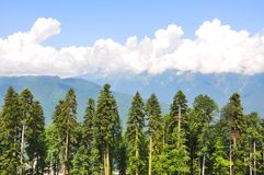 Horizontal de montagne d'été image stock